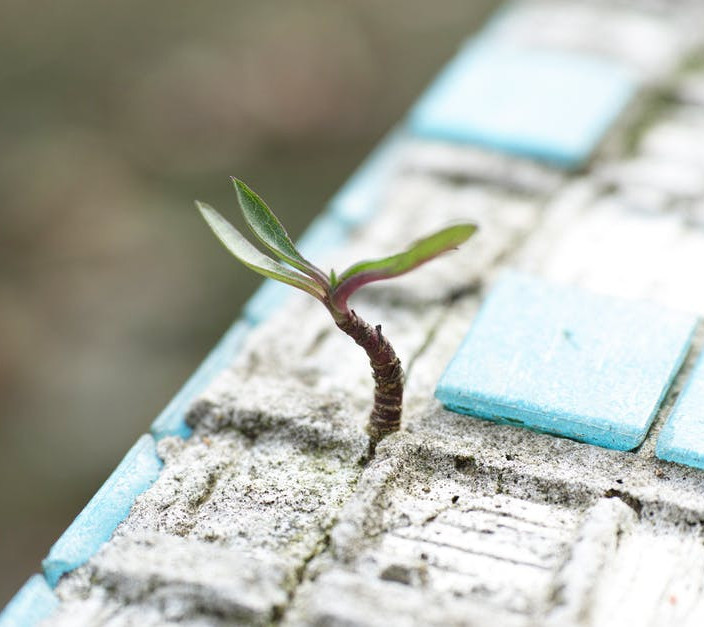 What to Do When Nobody Believes in You - Growing Plant