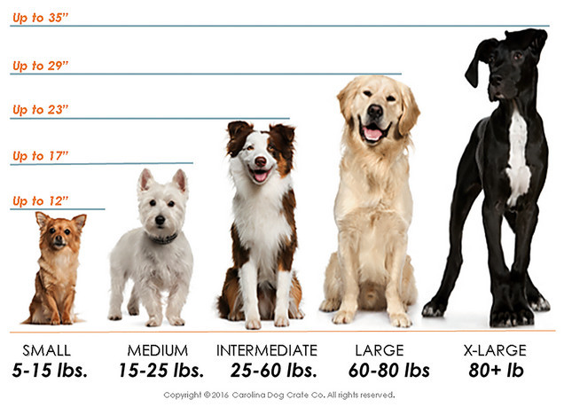 how big should my dog crate be - dog breeds