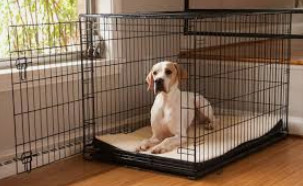 how big should my dog crate be - dog in crate