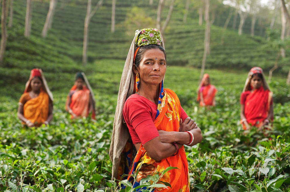 what is good about drinking tea - field