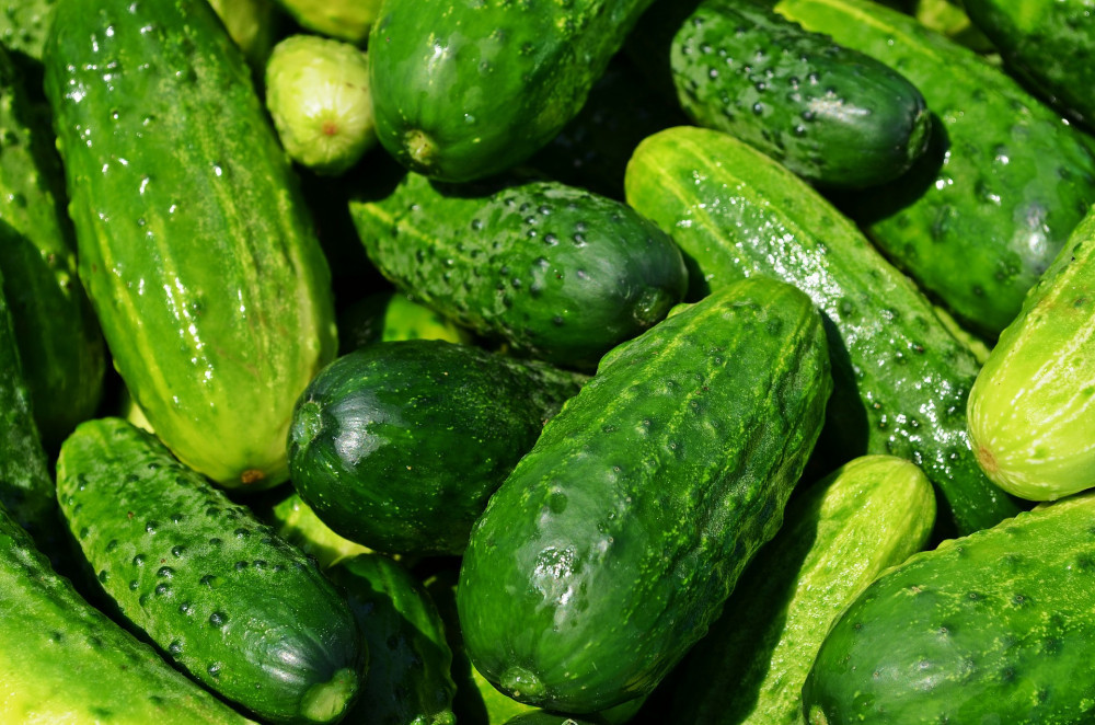 what kind of vegetables are good for dogs - cucumbers