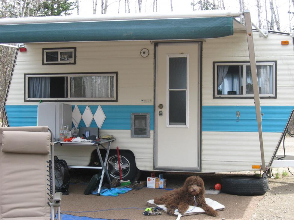 best dog camping gear - finn