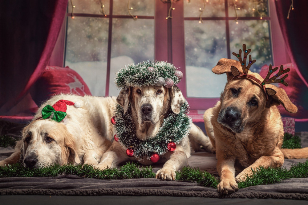 great dog christmas gifts - dogs