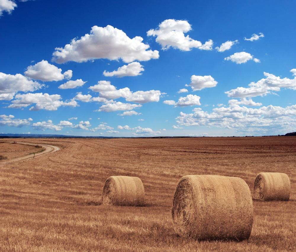 what's a prairie girl - wheat fields