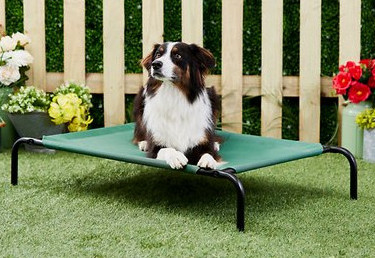 Elevated dog bed - best dog camping gear