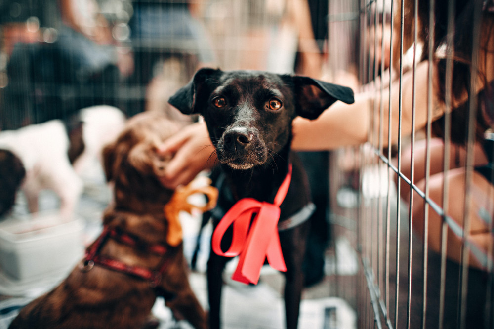 dog adoptions questions you may be asked - shelter dogs