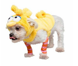 Awesome dog costumes - big bird