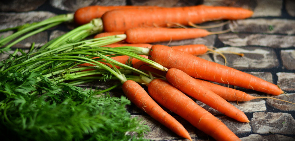 what kind of vegetables are good for dogs - carrots