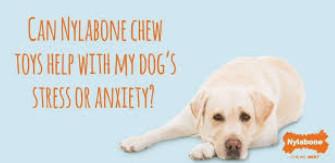 benebone vs nylabone helps with anxiety