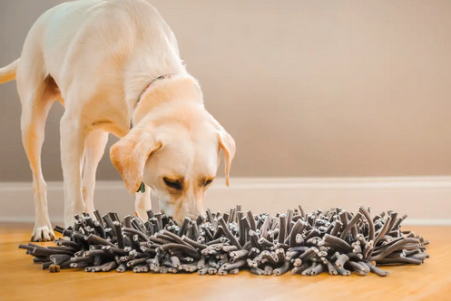 dog snuffle mats - paws5 wooly