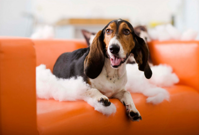 how to get your dog to stop chewing on things - pillow