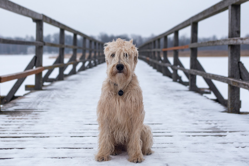 tips for winter weather and dogs - on the bridge