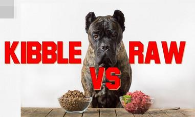 raw dog food or kibble screenshot