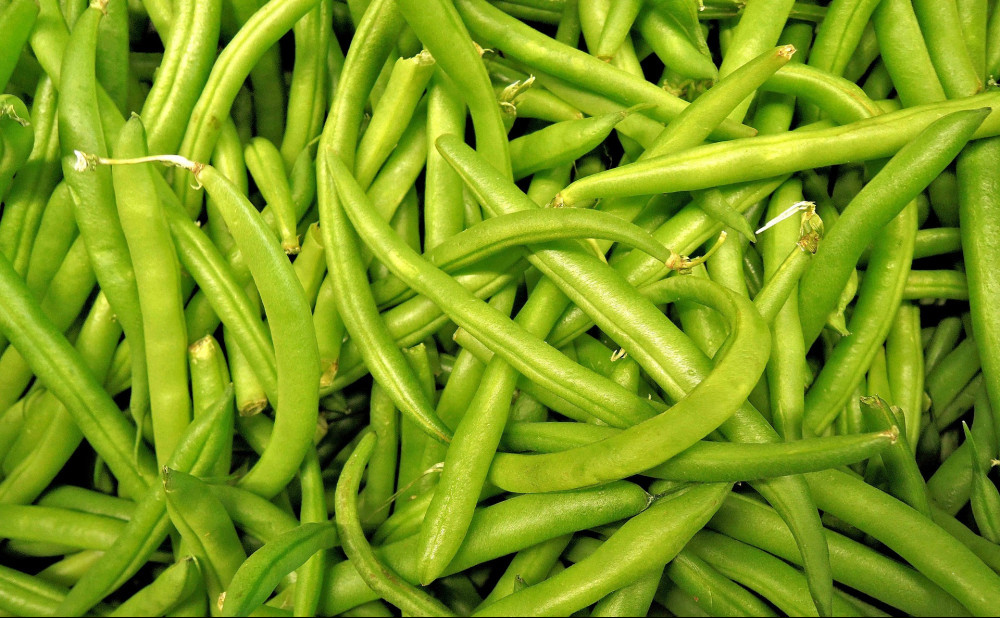 what kind of vegetables are good for dogs - green beans