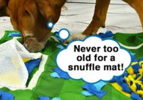 dog snuffle mat - never to old