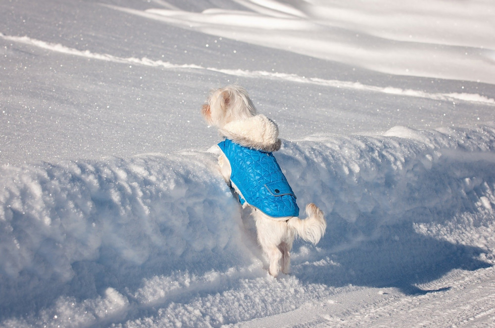 tips for winter weather and dogs - sunny outside