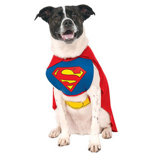 awesome dog costume - superman