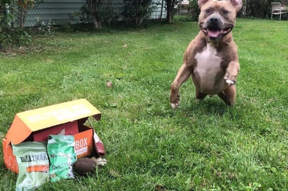 bullymake box reviews - dog box pittie