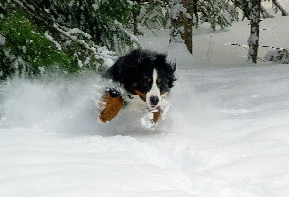 tips for winter weather and dogs