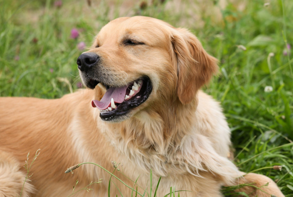 top 10 working dog breed