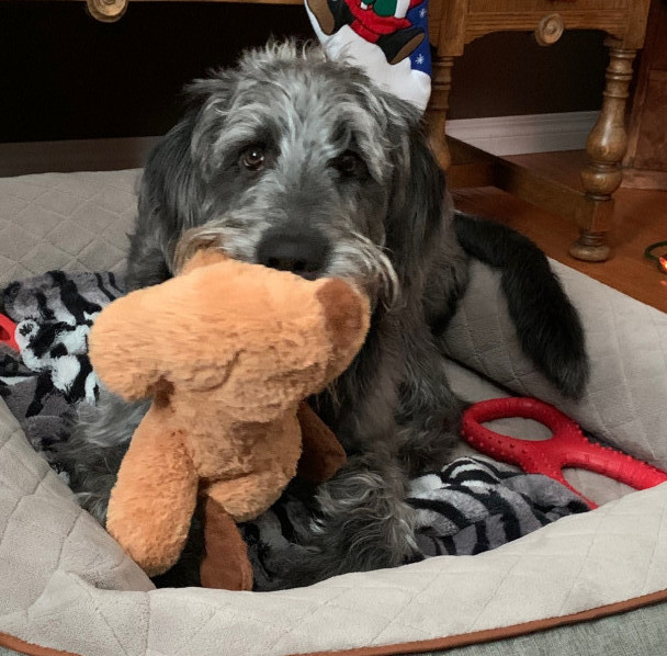 snuggle puppy toy with fergus