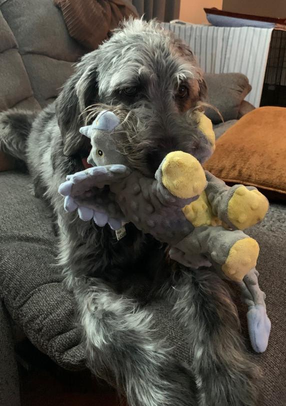 goDog chew guard toys - fergus toy