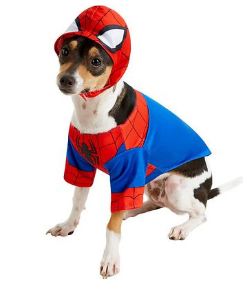 awesome dog costume - spiderman