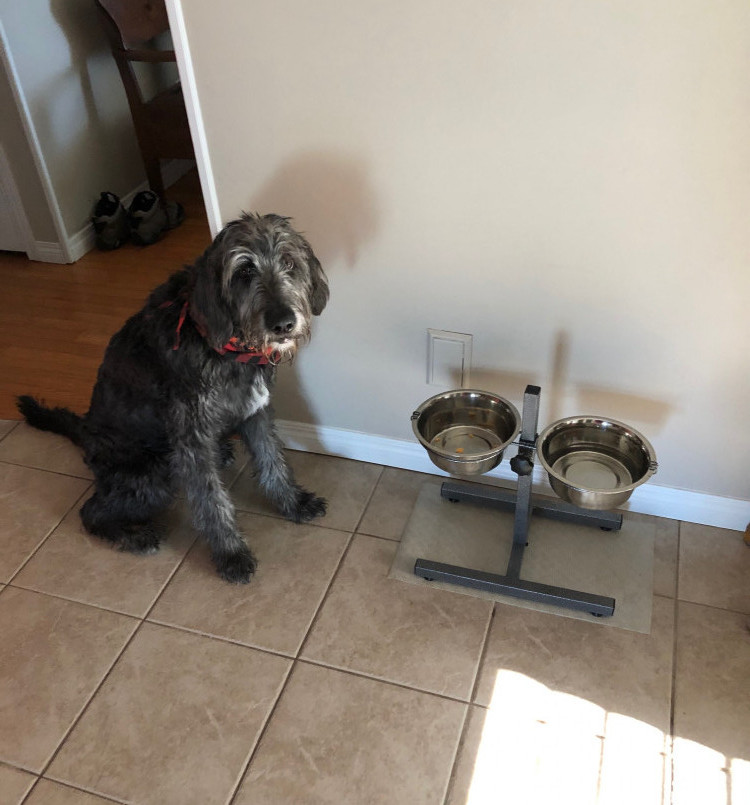 should dog bowls be elevated fergus by his bowl