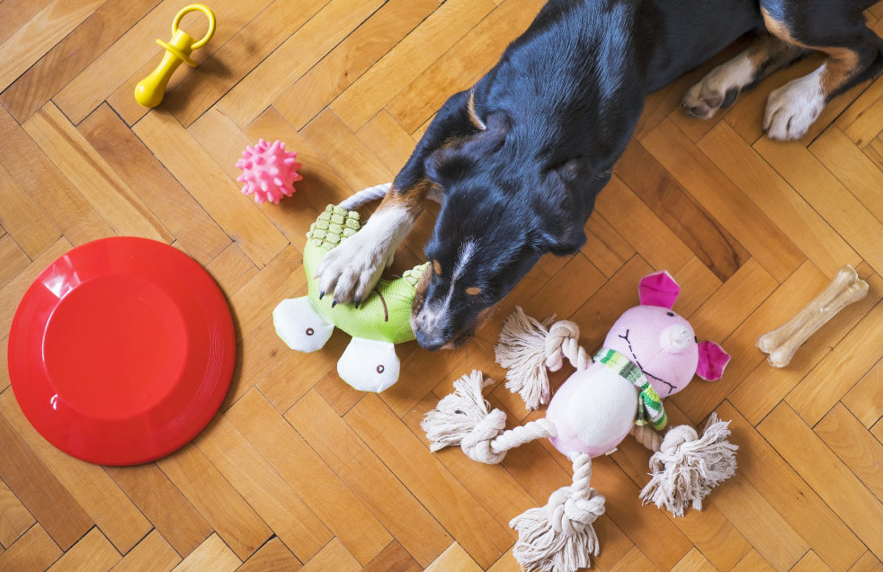 How to get your dog to stop chewing on things - toys