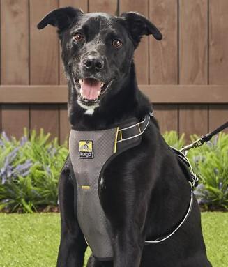 Kurgo dog gear - impact harness