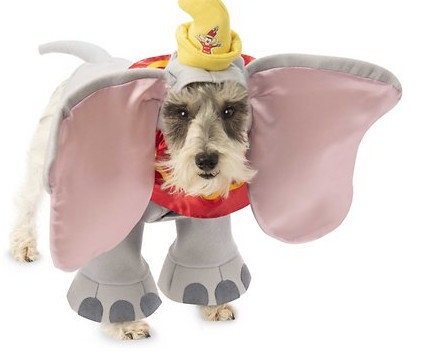 Awesome dog costume - disneys dumbo