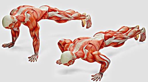 Anatomy Press Up