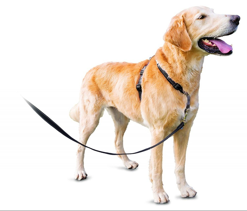 PetSafe 3 in 1 no pull dog harness on dog