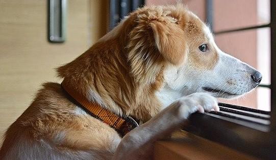 Lonely Dog- Image Unsplash
