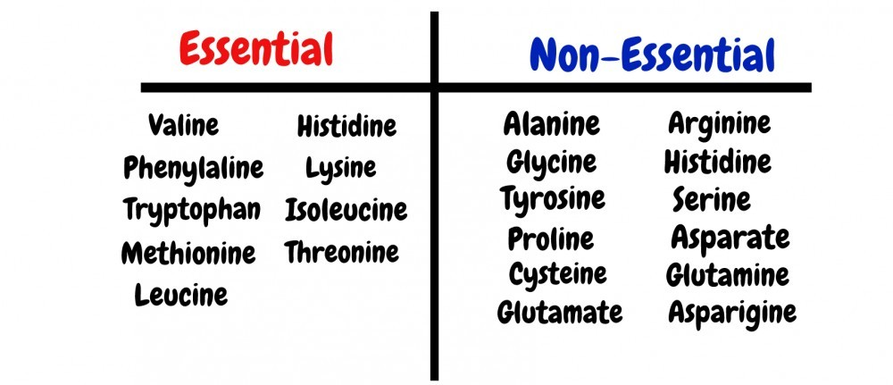 What Are Amino Acids For? - Protein's Foundation