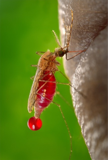 Information About Malaria Disease
