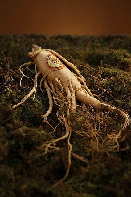 Ginseng for brain
