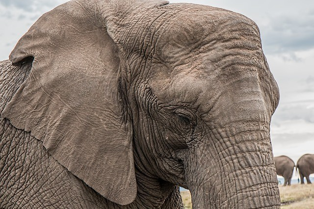 Elephant has a good memory