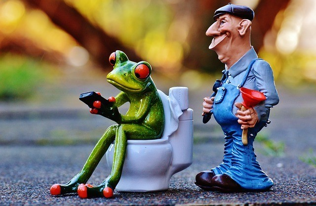 Frog is searching for Foods to Help with Constipation