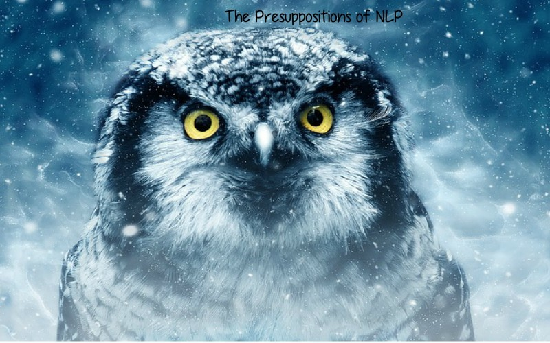 The Presuppositions of NLP