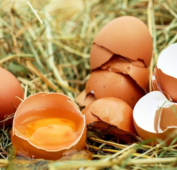 Open cracked eggs and eggshells
