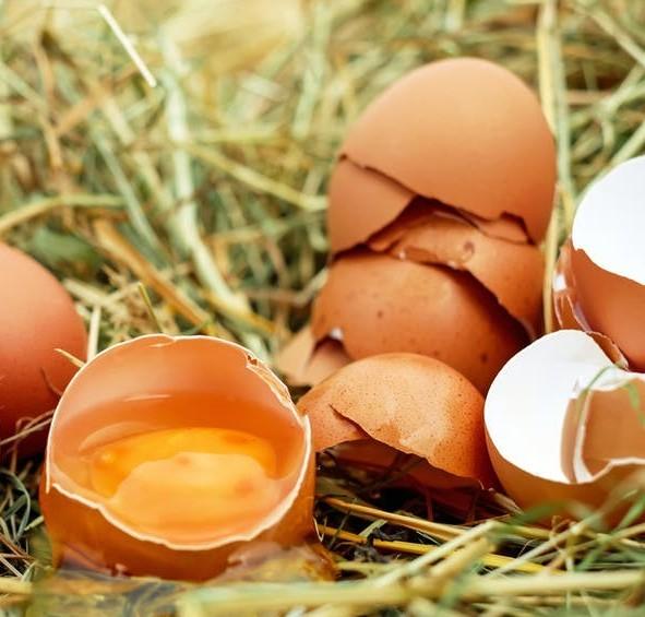 Open cracked eggs and eggshells