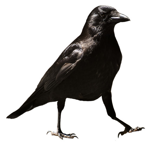 Raven SEO tools review