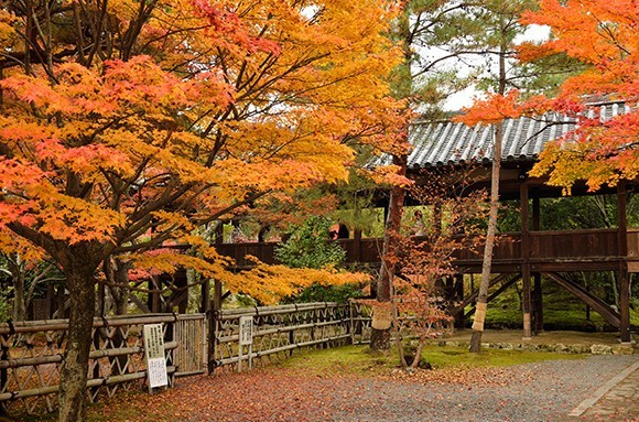 Autumn Foliage in Japan