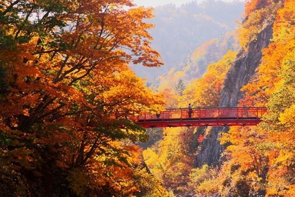 Autumn Foliage in Jozankei, Hokkaido