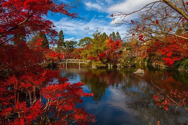 Autumn Foliage in Japan and All Colors Turned Red