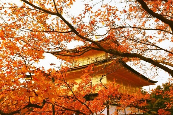 Koyo ( Autumn Foliage ) in Kinkakuji, Kyoto, Japan