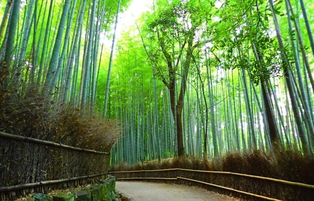 Bamboo Forest in Arashi-Yama