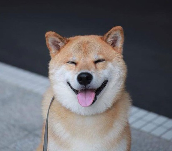 Look at how happ this shibe is!!
