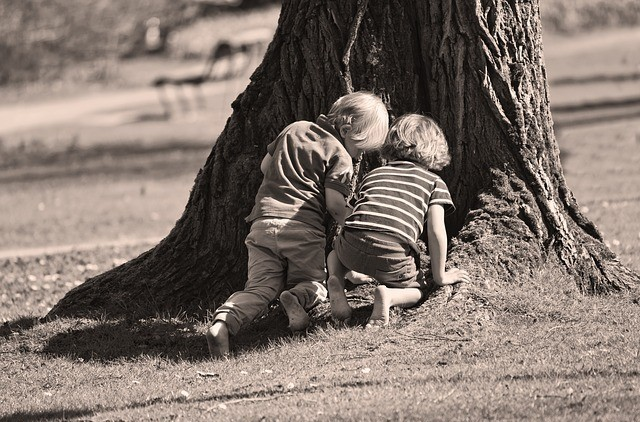 kids searching for something in a tree trunk